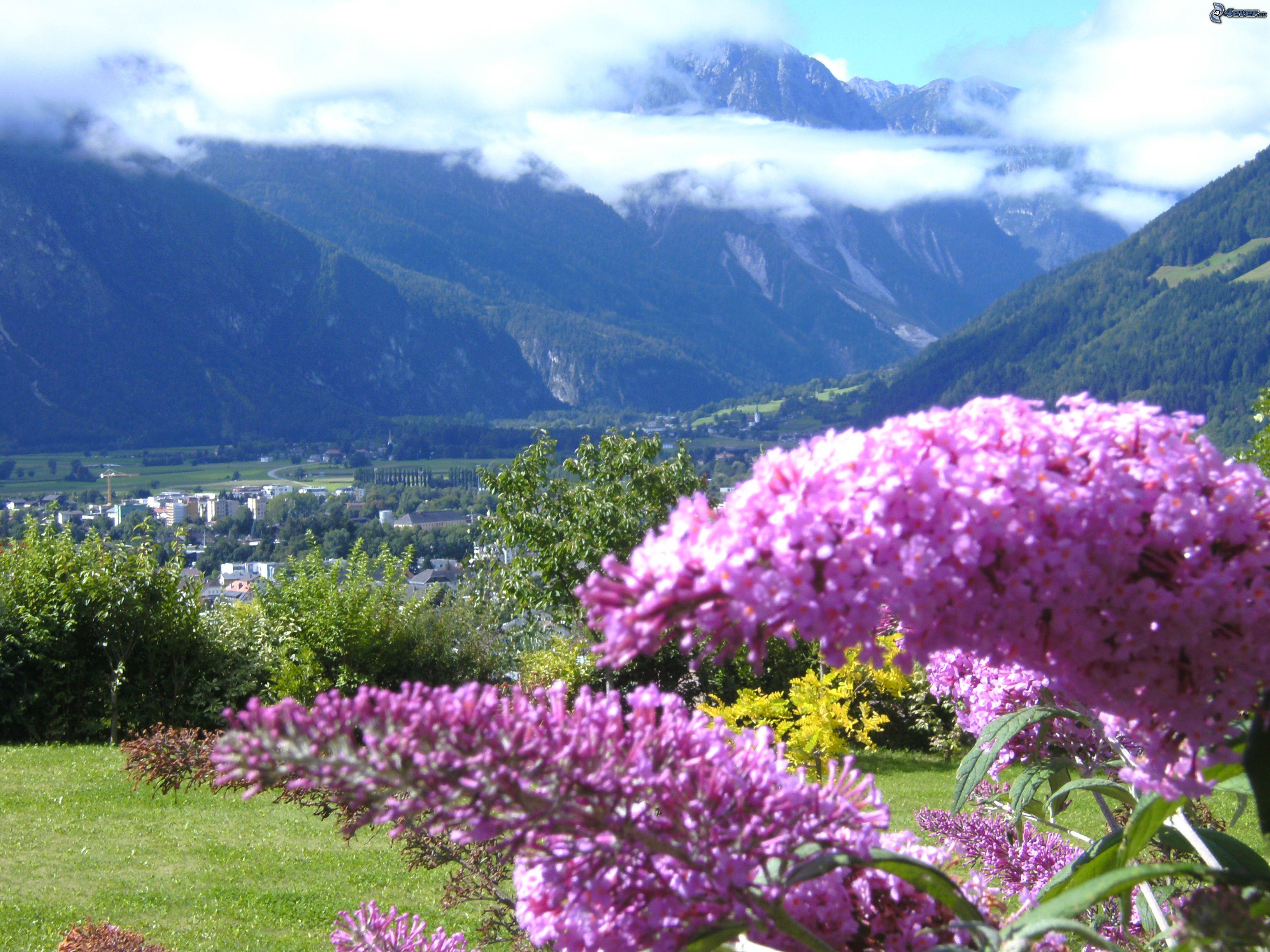 Цветы австрии