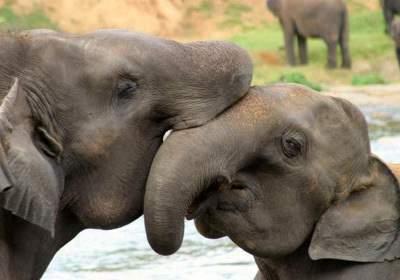 title=слон