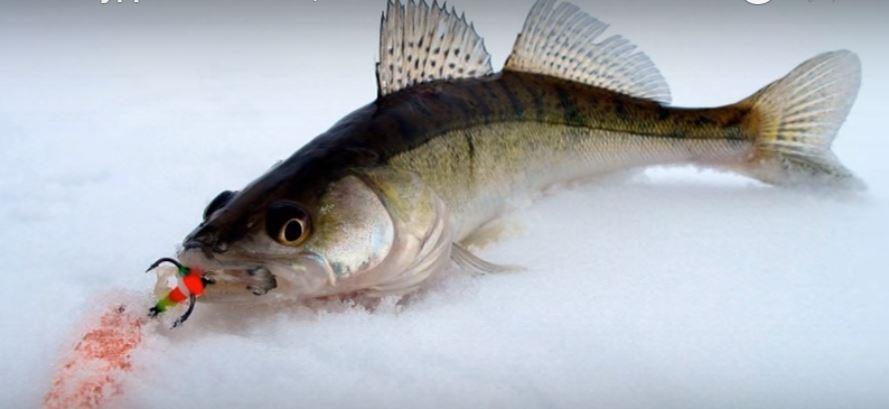 город судак рыбалка видео