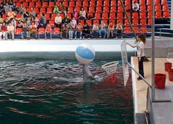 title=Экскурсия в дельфинарий
