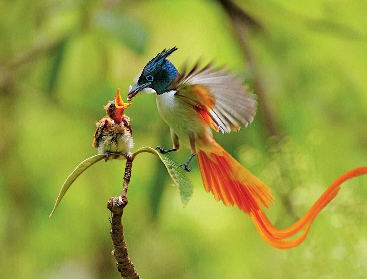 Seychelles_bird