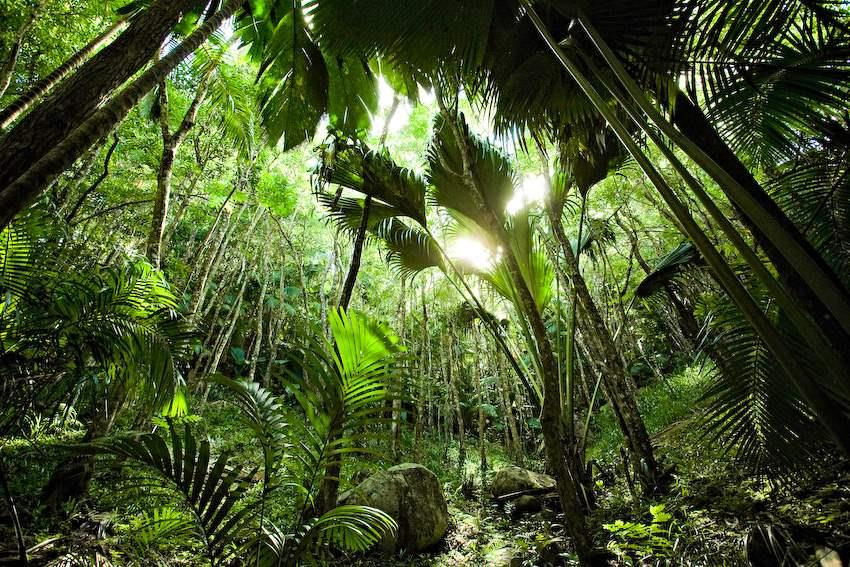 Seychelles_forest