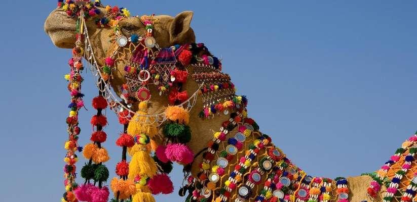 Camel_tunissia