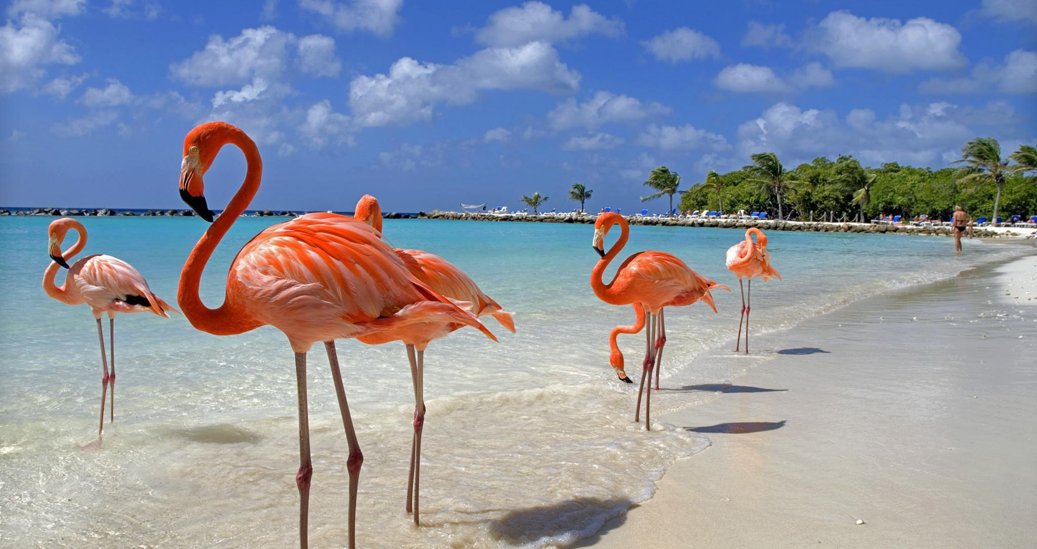 Aruba_main