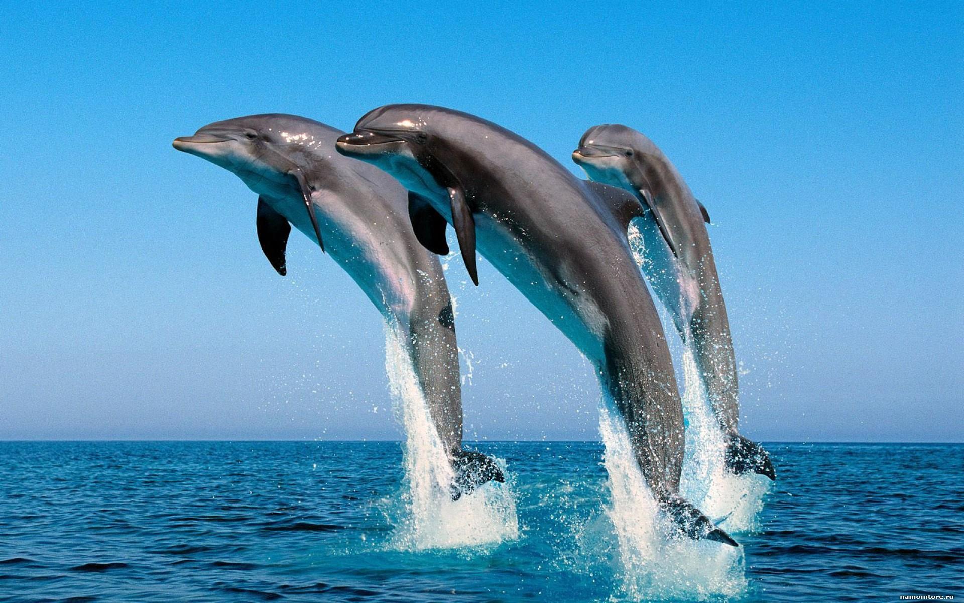 Dolphin_cove