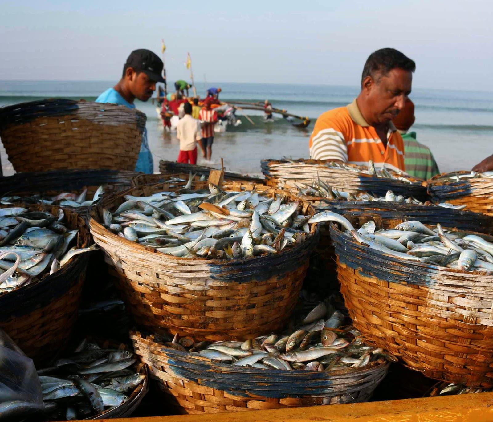 Рыбалка в индии на гоа