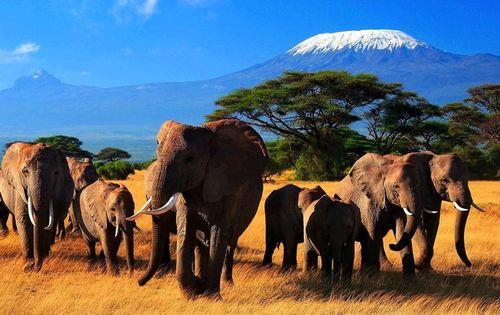 Kenya_elephants