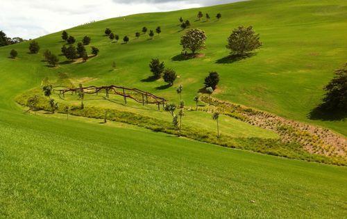 New_Zeeland_Grass