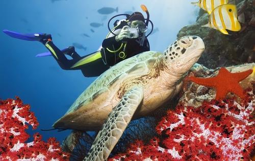 Oman_diving